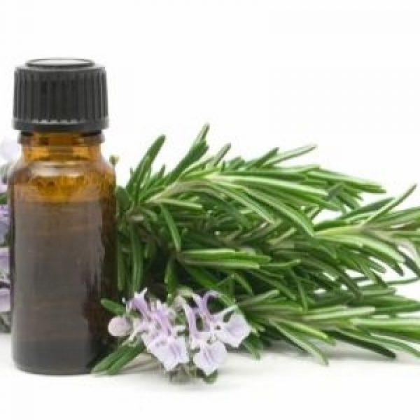 Eucalyptus Essential Oil - 1 Fluid Oz