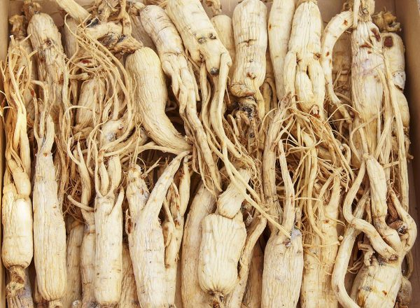 1 oz Ginseng extract panaxoside 80%