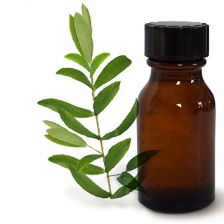 Tea Tree Essential Oil - 1 Fluid Oz